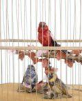 French-automaton-singing-bird-musical-animated-gilt-bird Cage-bontems-